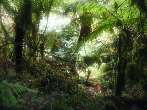 Archey's frog habitat. Credit: Dr. Bastian Egeter