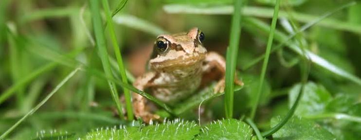Frog-e1410882024685