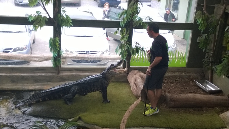 James Hennesy of Nationl Reptile Zoo, in action