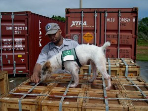 A snake-detector dog searching cargo. Credit: USDA